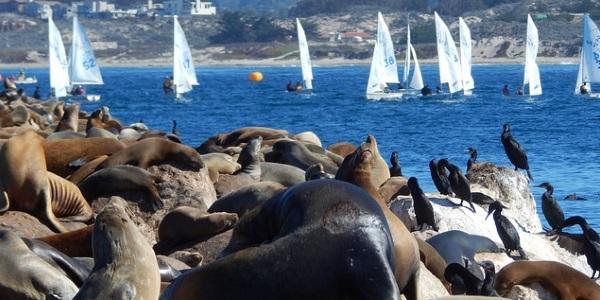 Zeeleeuwen Californië