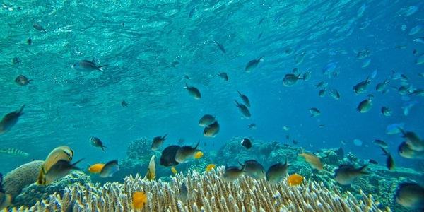 Onderwaterwereld Indonesie