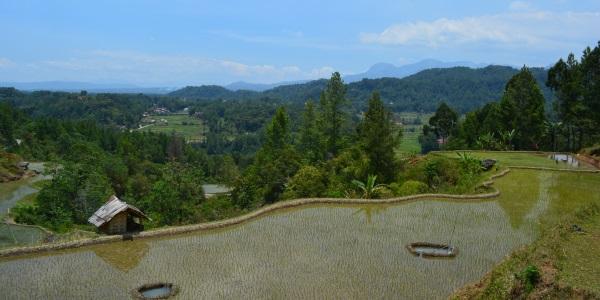 trekking Tana Toraja